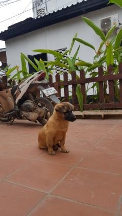 hundeler1